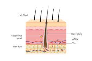 What Makes Hair Grow